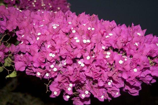 Baglio Elia Resort & Restaurant : campana di fiori