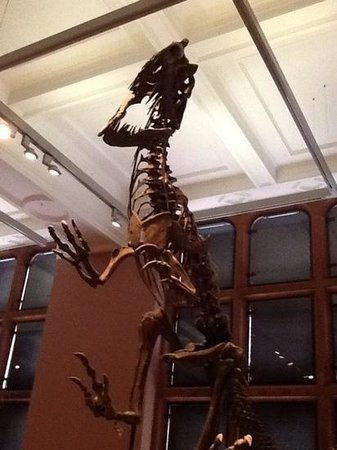 Kelvingrove Art Gallery and Museum: The Mighty T-Rex