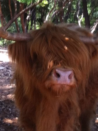 La Bastide du Plantier : Jonquilles la vache de la maison!!!