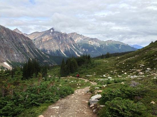 Cavell Meadows Trail: trailway 2