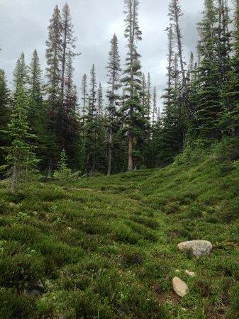Cavell Meadows Trail: lush greens