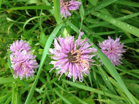 Eloise Butler Wildflower Garden and Bird Sanctuary: Eloise Butler Park Flowers
