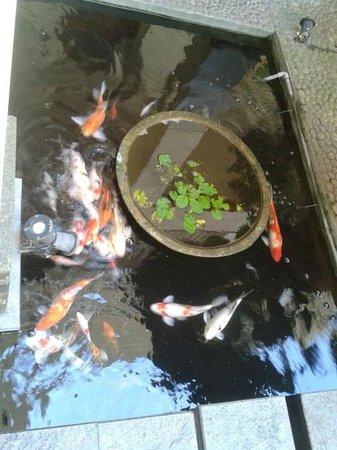 New Sany Rosa Hotel: Koi pond