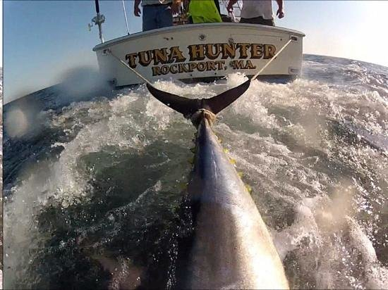 Gloucester ma and boston giant bluefin tuna fishing for Gloucester ma fishing charters