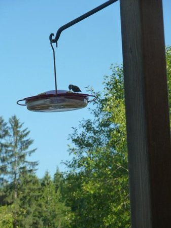 Quinault River Inn: on the porch
