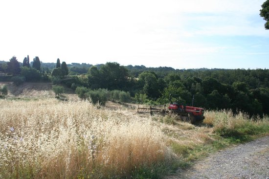 Podere Alberese : View from the driveway