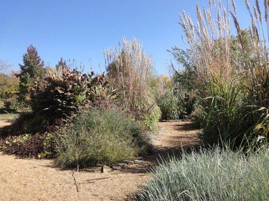 Nathanael Greene/Close Memorial Park: Grasses