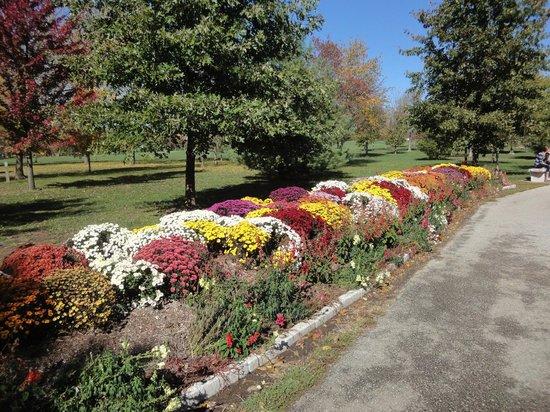 Nathanael Greene/Close Memorial Park: Fall flowers