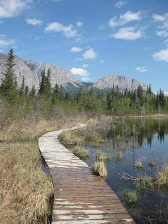 Bow Valley Provincial Park: Boardwalk on Many Springs Trail