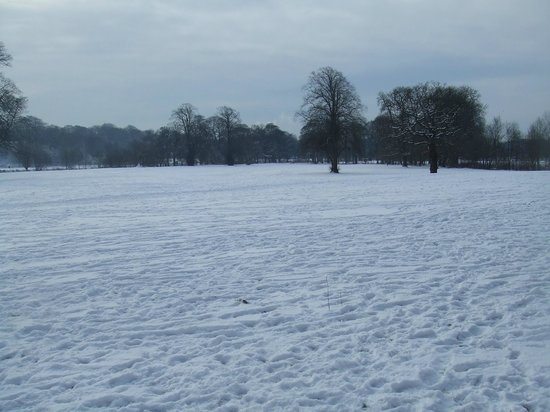 Blackburn, UK: winters day in witton park.