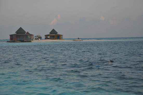 San Andres Diving & Fishing : snorkeling with sting rays