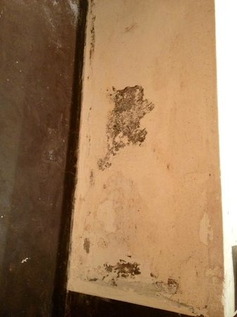 Riad Al Assala Medina : mold on the bathroom wall