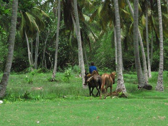 Grand Paradise Samana: Près de l'hôtel