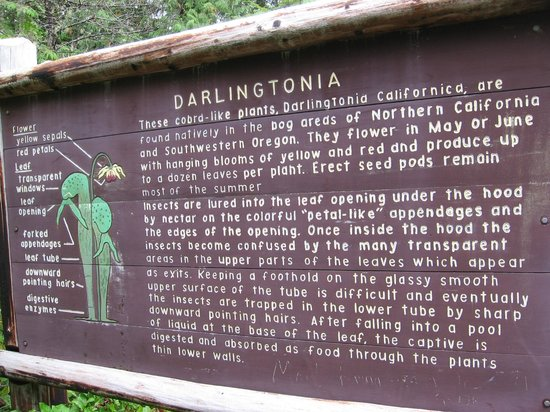 Darlingtonia State Natural Site: Plaque