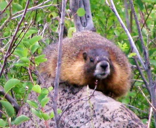 Grand Junction, Κολοράντο: Abundant Wildlife