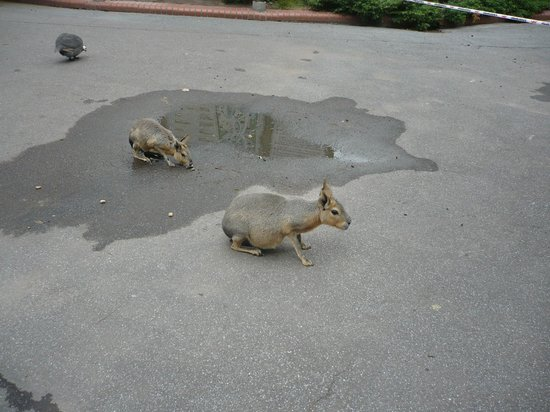 Zoo de Buenos Aires: Muchos animales sueltos