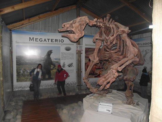 Centro de Interpretacion CALAFATE: Los primeros mamiferos de la zona