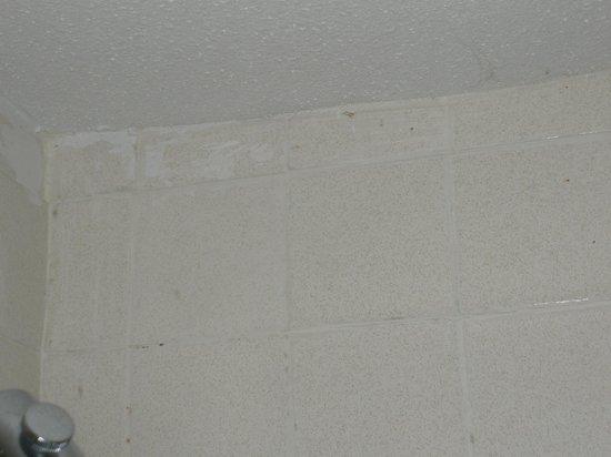 Western Inn Downtown: Warped ceiling, mold