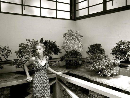 Museo del Bonsai: Musuem