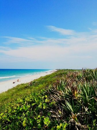 Canaveral National Seashore: Scrub barrier between parking and beach