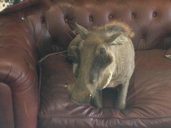 Daan Viljoen Nature Reserve : Oscar On His Couch