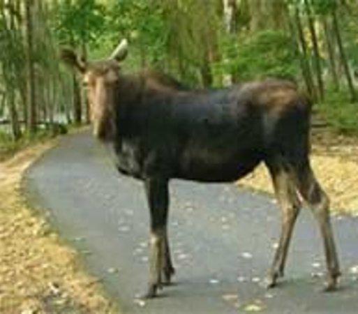 Northwest Trek Wildlife Park: our escort