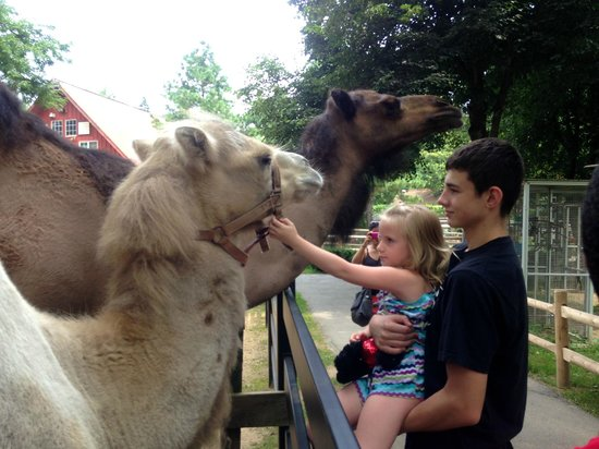 Zoo in Forest Park : Camels