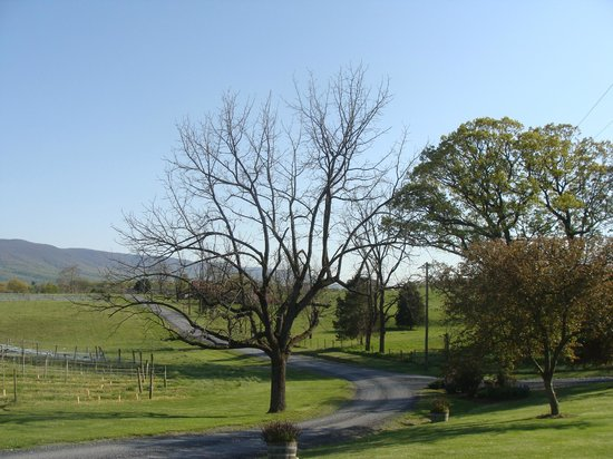 The entrance drive to Shenandoah Vineyards is scenic in of itself.