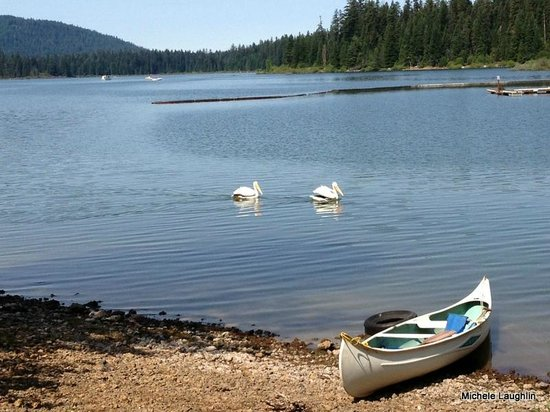 Fish Lake Resort : Pelicans are a typical sight on the lake