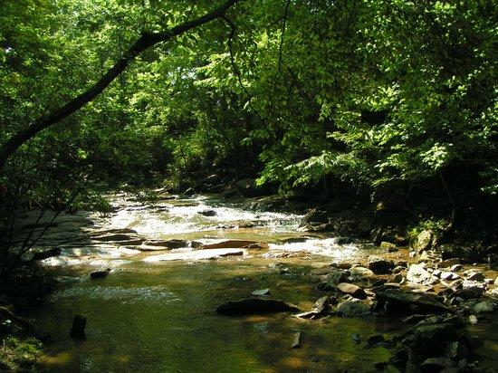 Botanical Gardens at Asheville: stroll along the stream