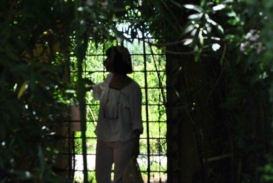 Organic eco farm Casarossa: Un punto del giardino