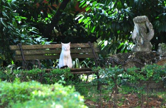 Organic eco farm Casarossa: La gatta