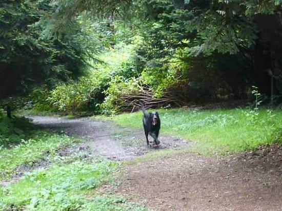 Drum Manor Forest Park: My dog enjoying his walk