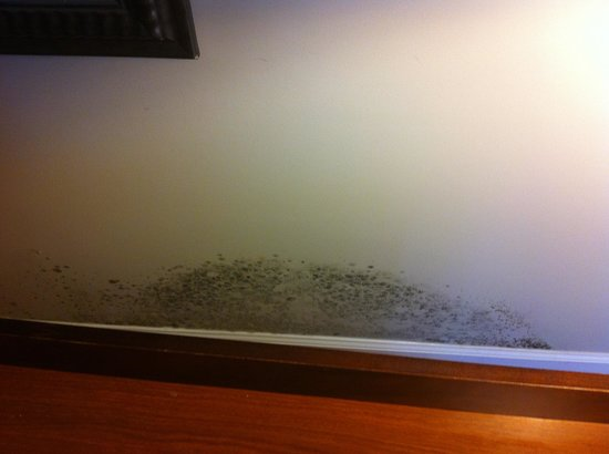 Tidelands Caribbean Hotel and Suites: Mold