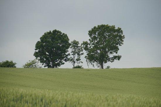 Parent Child Tree: parent and child trees