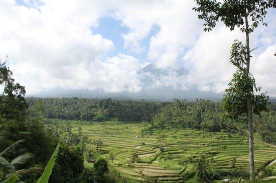 Mahagiri Panoramic Resort & Restaurant : Sawa's met op de achtergrond de vulkaan