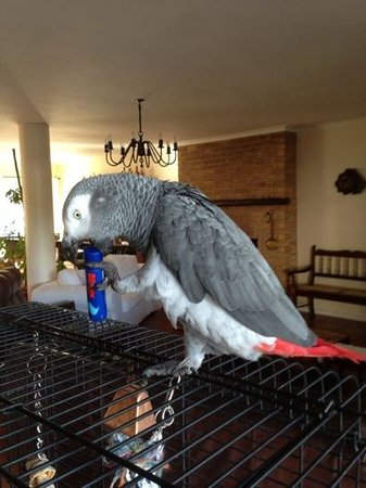 Nell's B & B: 'Stoffel', the owner's cute and friendly parrot.