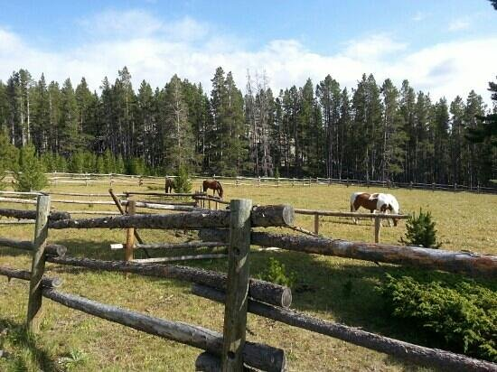 Klondike Ranch: the mountain corral.