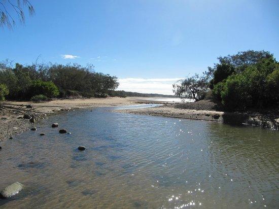 Mon Repos: Stream at south end. Plenty sandflies !