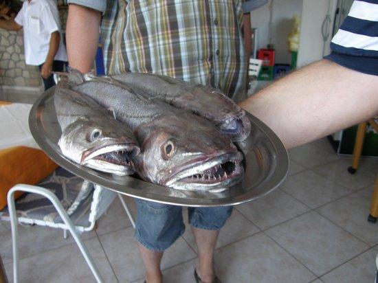 Danica: Hier kommt der Fisch frisch auf den Tisch
