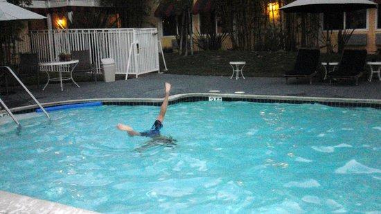 Wild Palms Hotel - a Joie de Vivre Hotel: pool