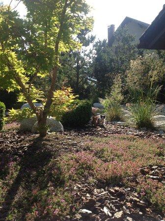 Alpaga : Le jardin de l'hôtel avec les deux chatons