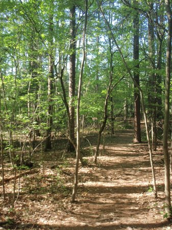 Occoneechee Mountain State Natural Area: One of the trails