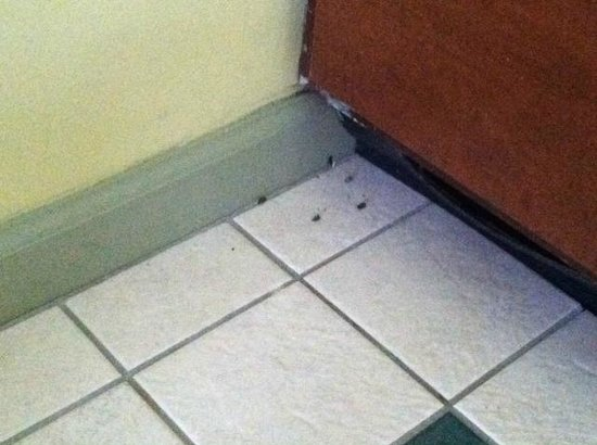 Fernwood Resort: Dead bugs in kitchen