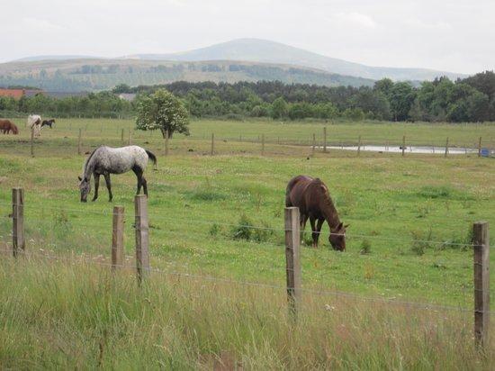 Scottish Equestrian Hotel: Gemini & Riverdance
