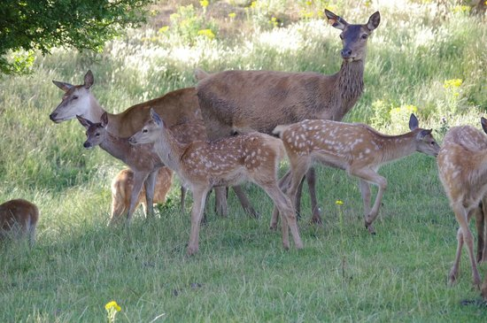 King's Lynn, UK: Mom's and their babies