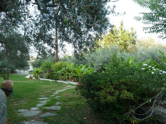 Villa Galini Lindos: Garden