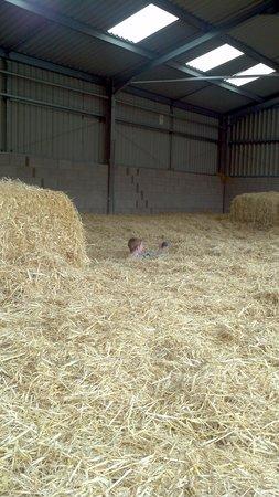 Mabie Farm Park: Fun in the straw barn