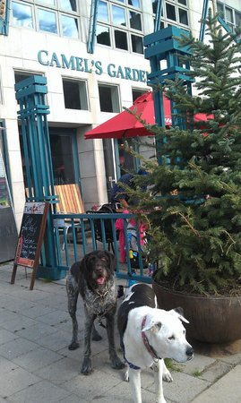 Oak: Happy dog customers