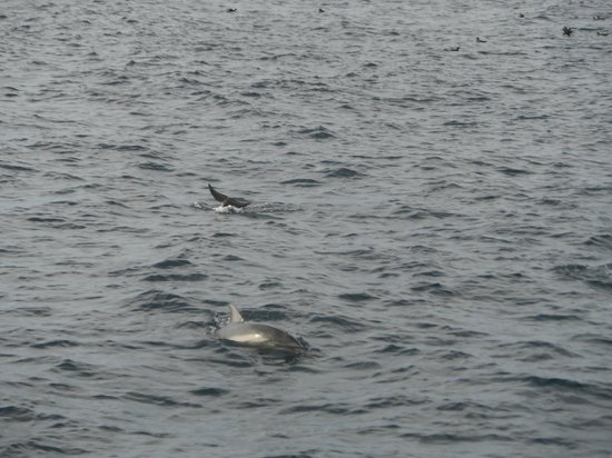 2SeeWhales Harbor Breeze Cruises : All the dark spots are dolphins